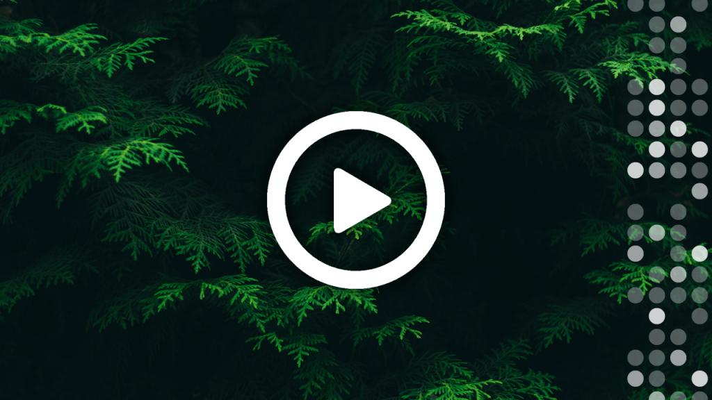 Conifer Thumbnail