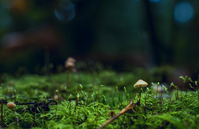 Mushroom Small Banner